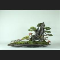 真柏・五葉松・長寿梅・石付  約60年