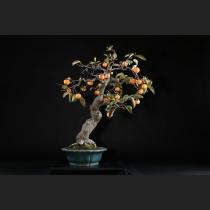 山柿 約80年