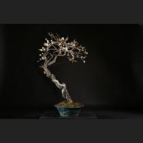 野梅(一重白梅)約120年